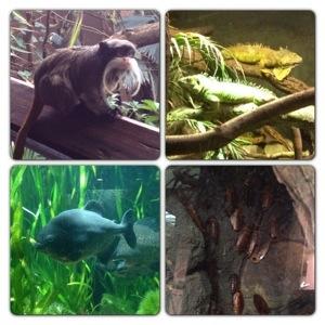 Rainforest Life