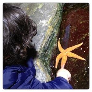 Touching Starfish at London Aquarium