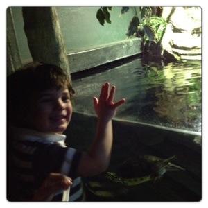 Turtles at the London Aquarium