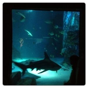 Shark at the London Aquarium