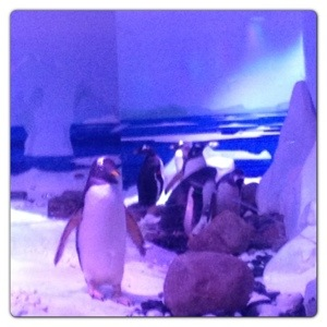 Penguins: Ice Adventure at London Aquarium