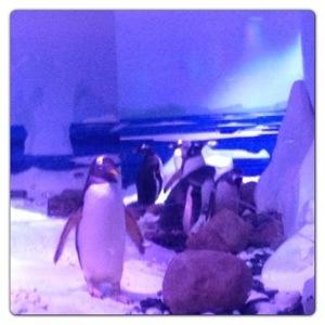 Penguins: Ice Adventure at London Aquarium