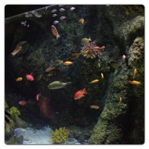 Tropical Fish at the London Aquarium